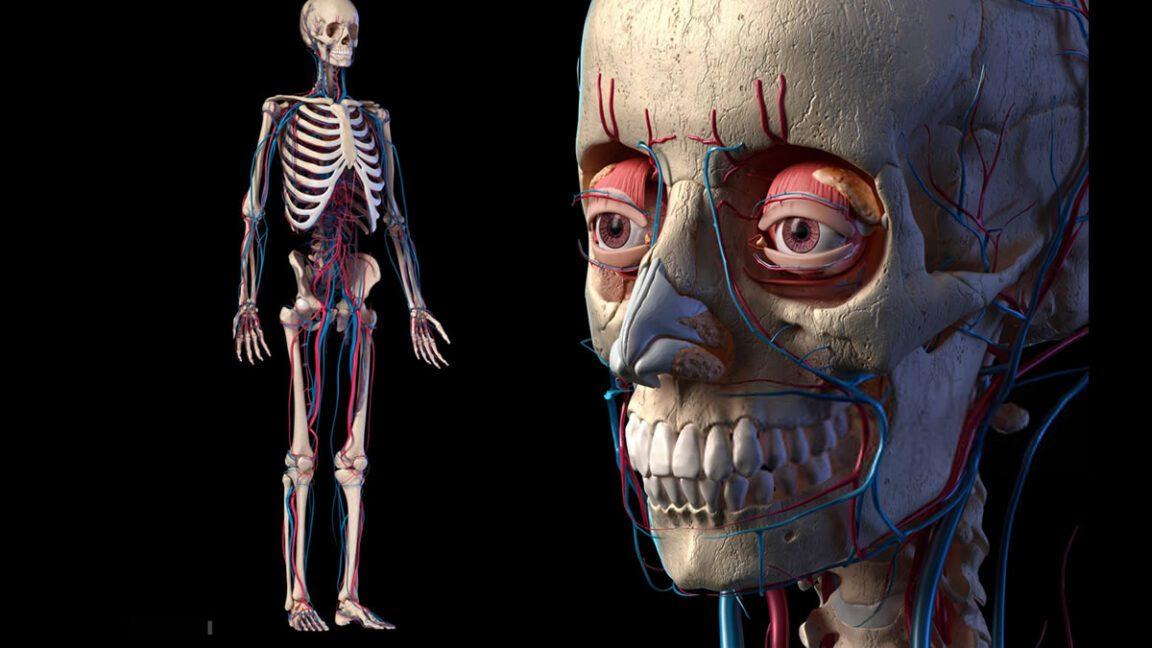 5 límites del cuerpo humano