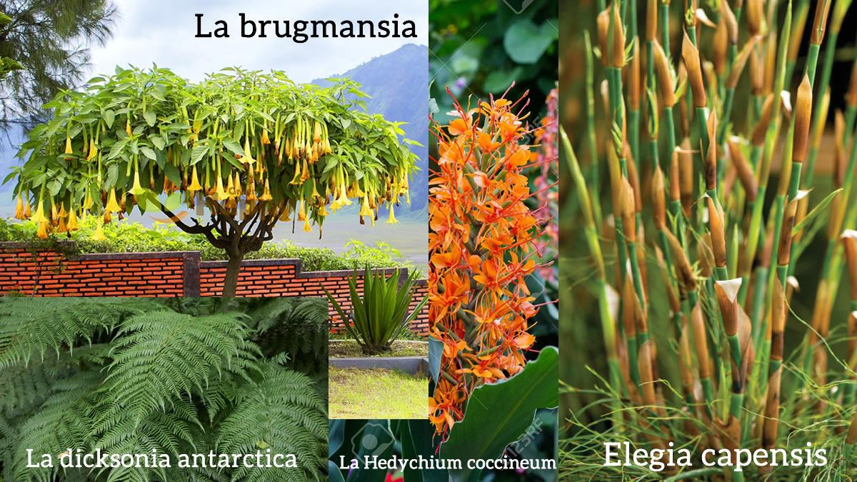 Exótico-Tipos de flor